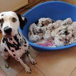 Как принять роды у собаки в домашних условиях?