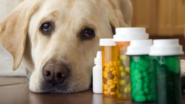 Лечение артроза тазобедренного сустава у собак щелканье в суставах лопатки