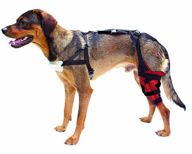 Остеоартроз коленного сустава у собаки лечение thumbnail