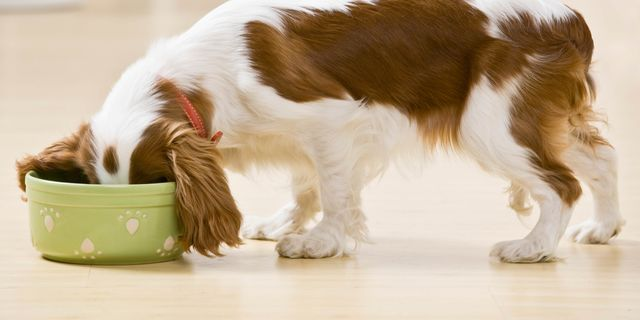 Контроль питания собак