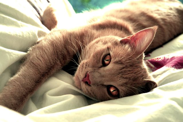 The symptoms of hyperparathyroidism in cats