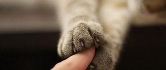 Забота о здоровье кошки