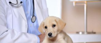 Прививка щенков