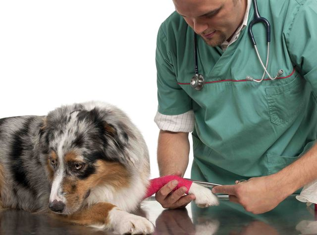 Перелом у собаки
