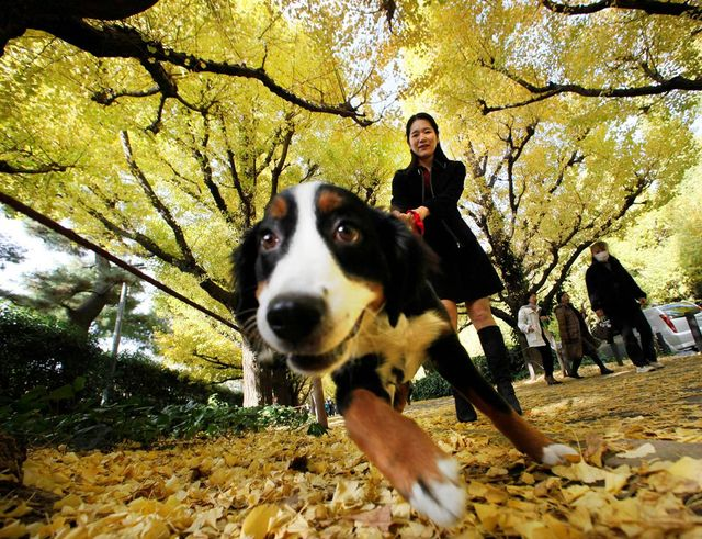 С собакой на прогулке