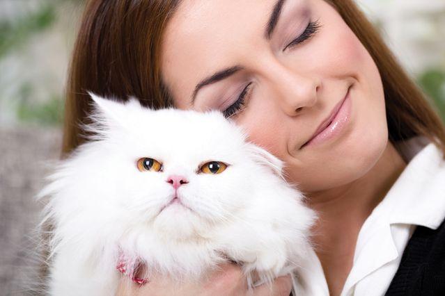 Персидские коты белый окрас