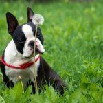 Собака кашляет, как лечить?