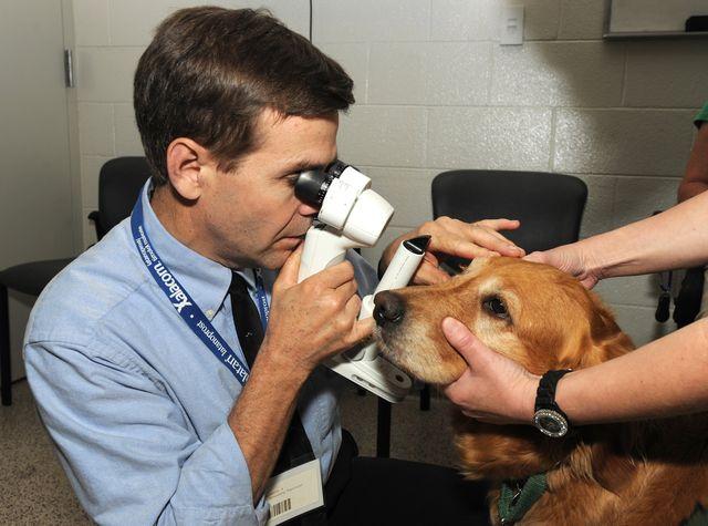 Травмы глаз у собак