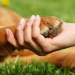Лечение вывиха у собаки