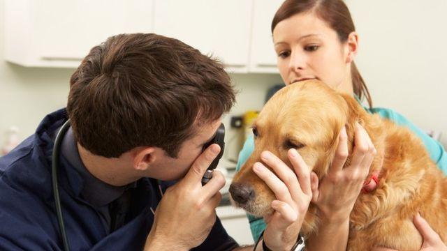 Выделение глаз у собак