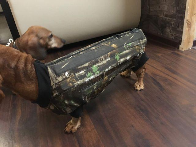 Корсет для собаки