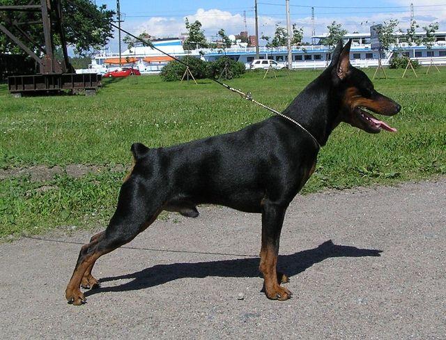 dog stand