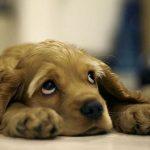 Причины и способы лечения недержания мочи у собак