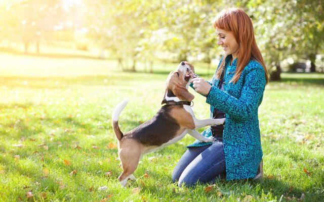 Женщина играет с собакой