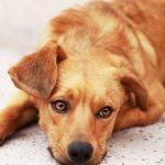 Почему у собаки отнимаются лапы?