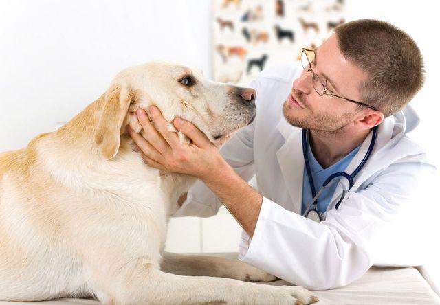 Врач осматривает собаку