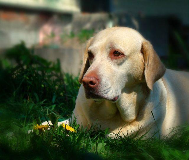 Глаз болит у собаки