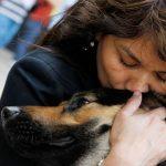 Что делать если запор у собаки?