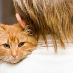 Как и чем лечить цистит у кота