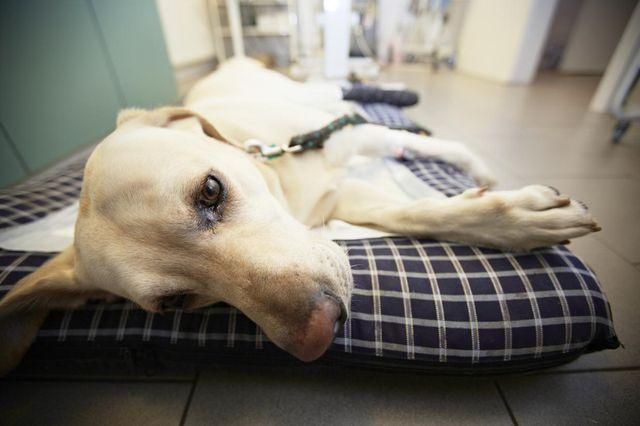 Собака лежит на одстилке