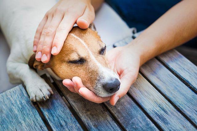 Хозяин держит голову пса
