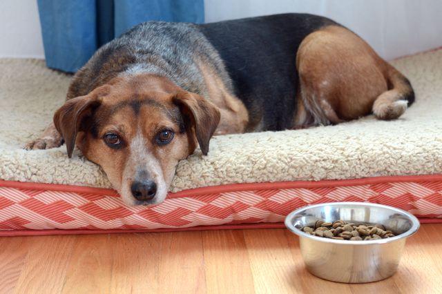 Собака лежит возле миски