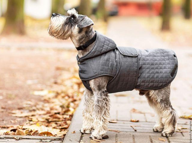 Собака на осенней улице