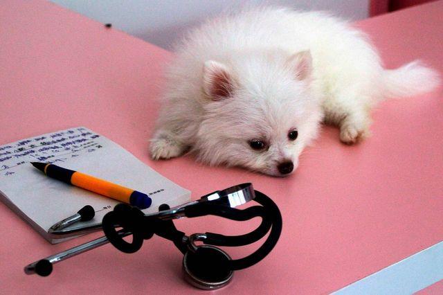Собака лежит на столе