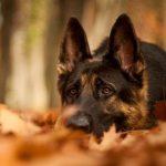 Профилактика и лечение цистита у собак