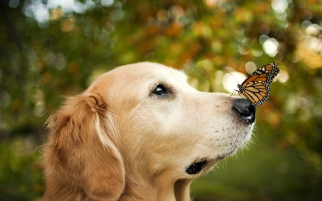Butterfly on the nose of a dog