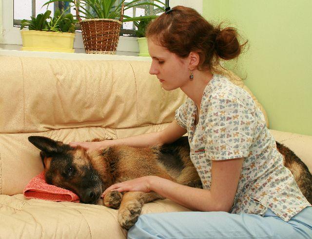 Хозяйка лечит собаку