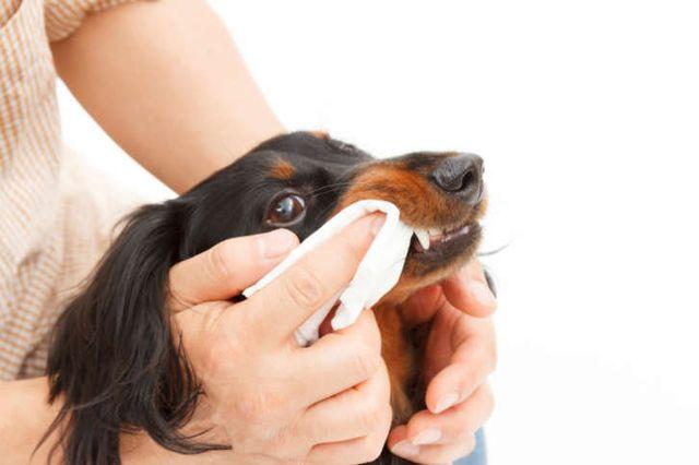 Уход за зубами у собаки