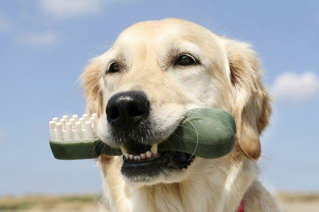 Собака с гигиенической игрушкой