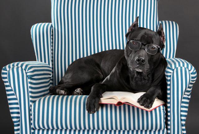 Пес в очках на кресле