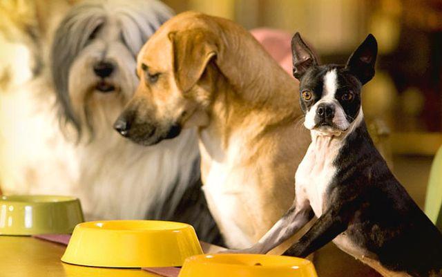 Собаки жду кормежки