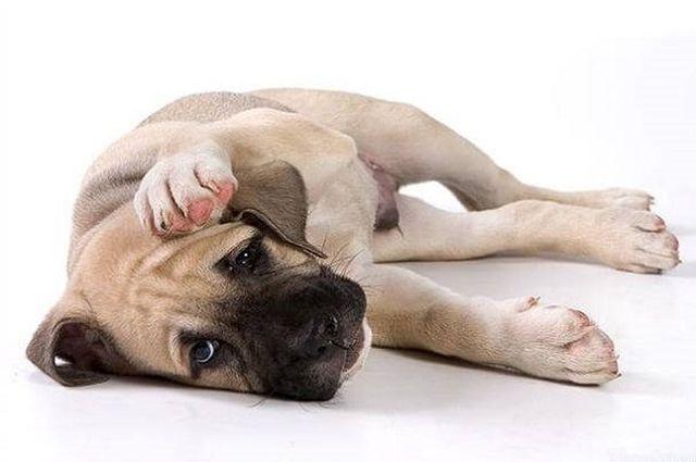Собака прикрывает голову