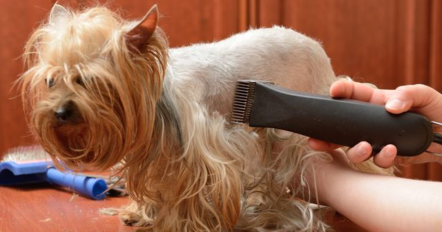 Гигиеническая стрижка собаки