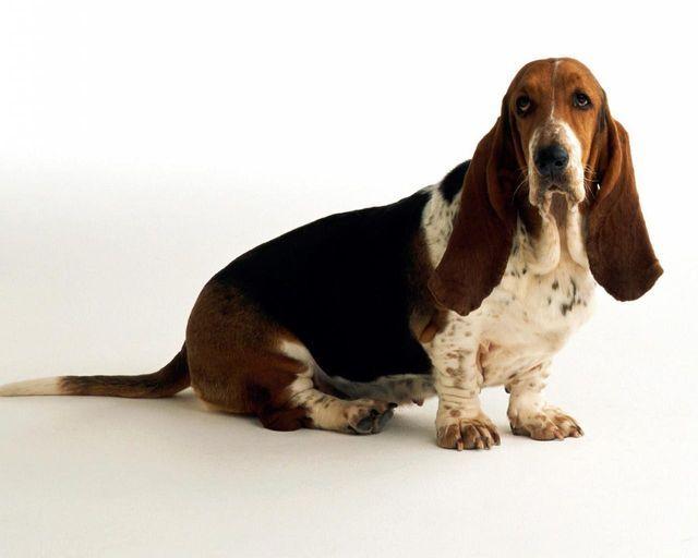 Собака сидит на полу