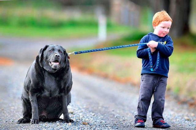 Мальчик выгуливает собаку