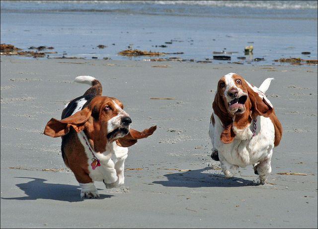 Собаки бегают по берегу