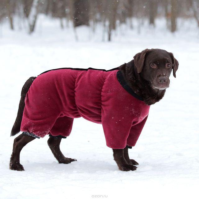 Ревматизм суставов у собак эндопротезирование коленного сустава сроки восстановления