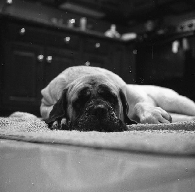 Собака лежит на подстилке