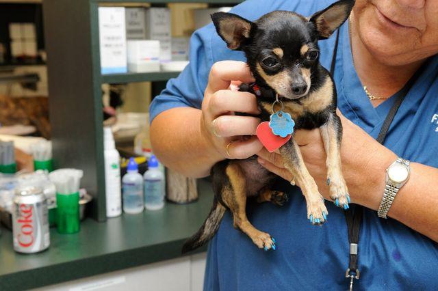 Ветеринар осматривает пса