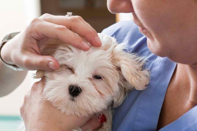 Пес на руках у врача