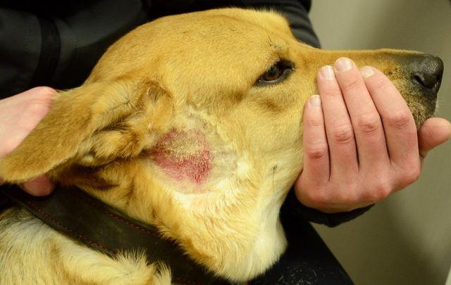 Может ли быть атопический дерматит у ребенка на собаку thumbnail