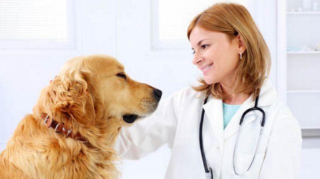 Пес смотрит на врача