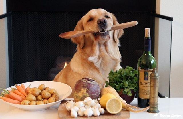 Собака держит ложку