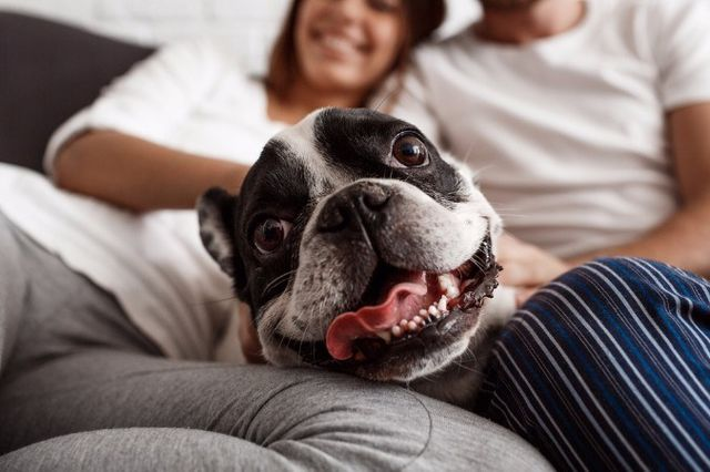 Собака между хозяев