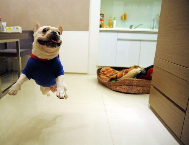 Пес прыгает