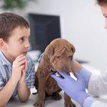 Виды кожных заболеваний у собак